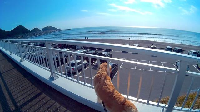 -My Home Point-Kyoko Ogino from Chiba-Minami