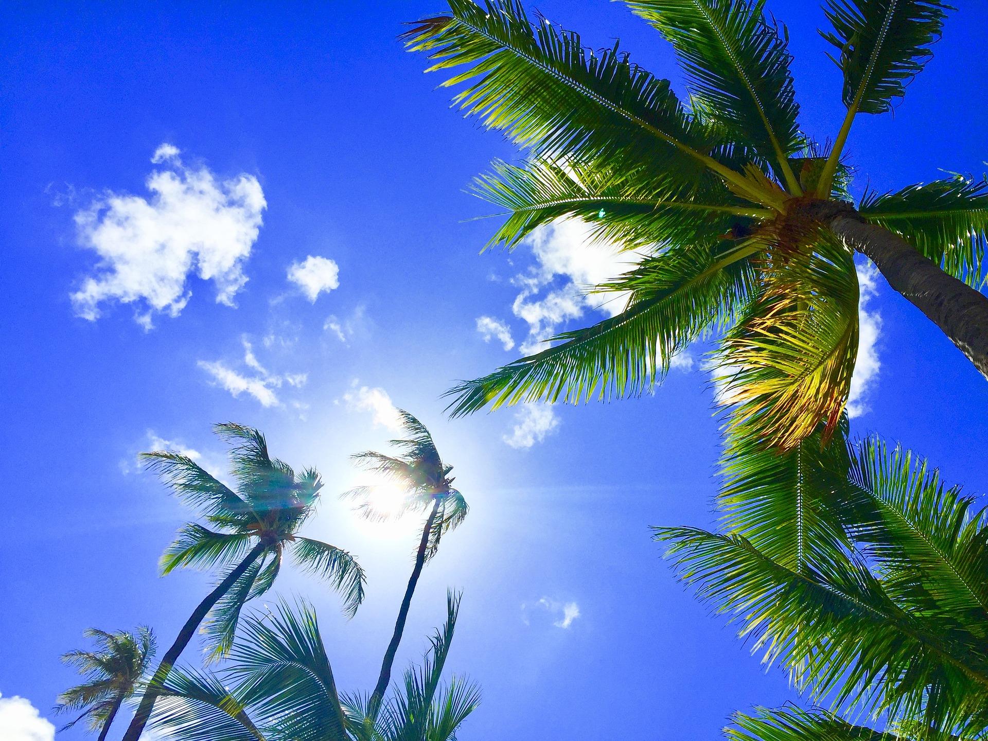 NEWコーナー「Hawaii Breeze from Masako Nishimoto」がスタ—トします☆