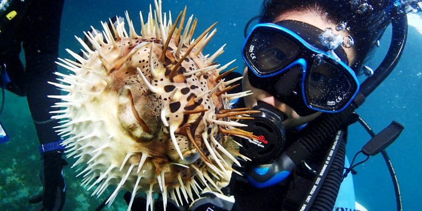 【Sirena's File no.8】 〜22歳システムエンジニア、好きな生き物は・・・サメ!!〜