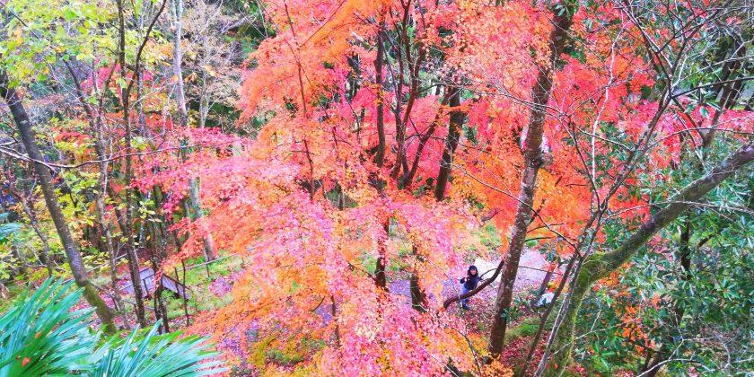-2019 October-秋といえば!!-Yuki Kitagawa from Hyogo